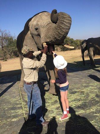 Bela Bela, Sør-Afrika: photo0.jpg
