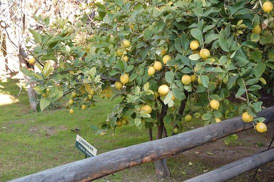 Maipu, Argentina: Plantações do local