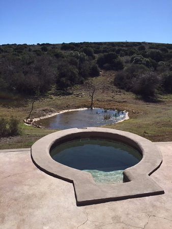 Заповедник Амакала, Южная Африка: Chalet 2 plunge pool with view of waterhole