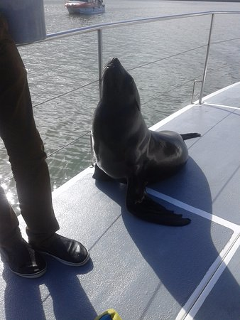 Catamaran Charters: foca