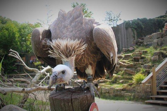 Alphen aan den Rijn, The Netherlands: Vulture.