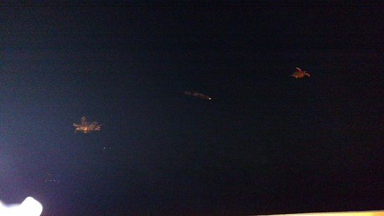 Frederiksted, St. Croix: Turtles swimming at night, don't photograph well, but, are amazing in person