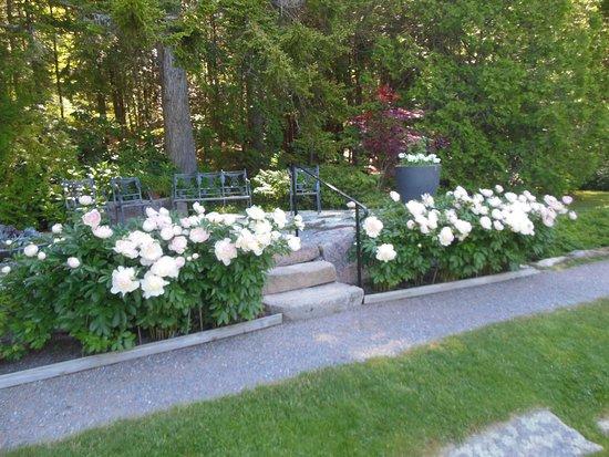 Northeast Harbor, Maine: Thuya Garden