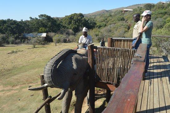 Addo Elephant National Park照片