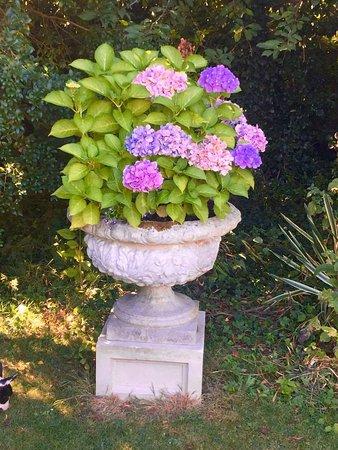 Whittlesford, UK: Hydrangea in the gardens
