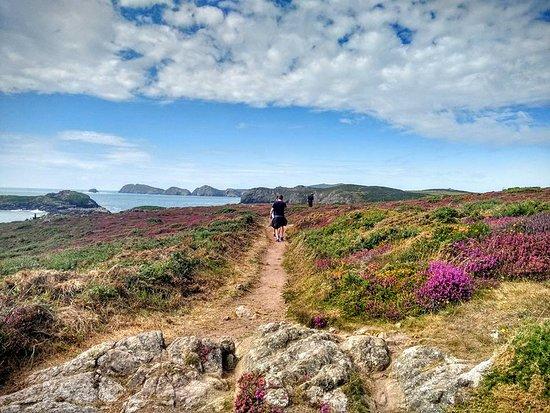 St. Davids, UK: Coastal Walk in Porth Clais.