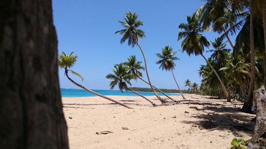 Playa Limon, Dominikanische Republik: 20160821_123155_large.jpg