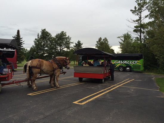 Hillman, MI: The horse drawn wagons.