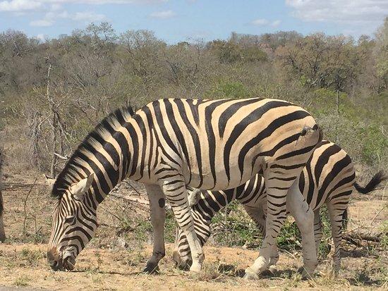 Nelspruit, Sudáfrica: photo5.jpg
