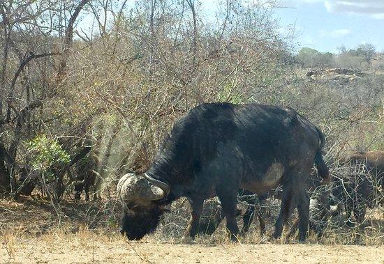 Nelspruit, Sudáfrica: photo7.jpg