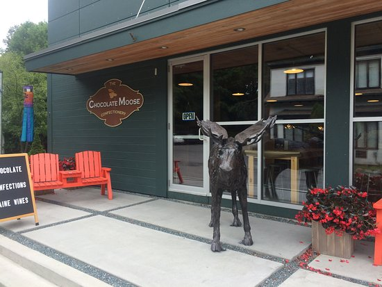 The Chocolate Moose Photo