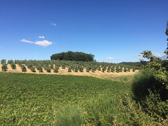 Fattoria del Colle - Agriturismo: photo8.jpg