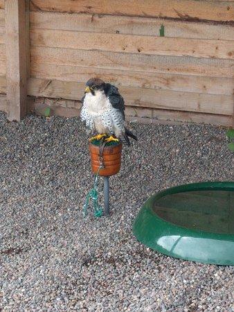 Ravenglass, UK: and more