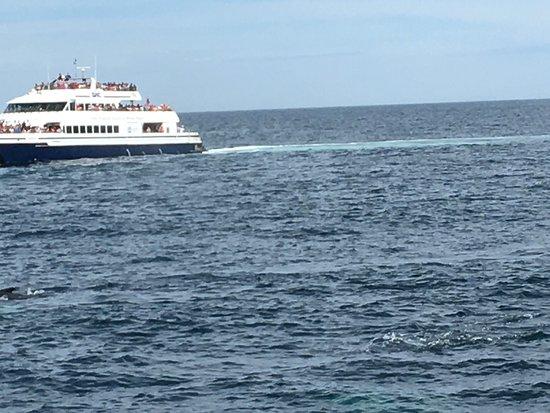 Cape Ann Whale Watch: Cape Ann -