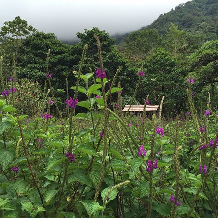 Bajos del Toro, Costa Rica: Butterfly and Hummingbird Garden