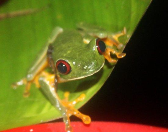 Zdjęcie Costa Rica Jade Tours