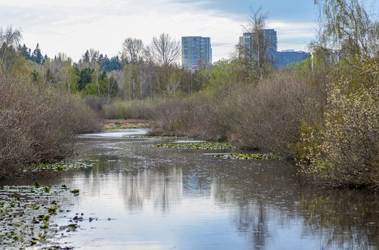 Mercer Slough Nature Park: The slough with Bellevue downtown view
