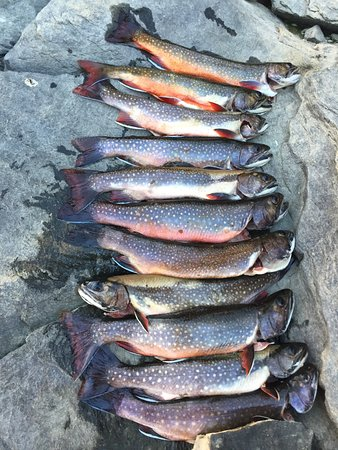 Centennial, WY: We had one VERY good day of fishing, one so/so day