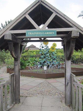 Trainees garden