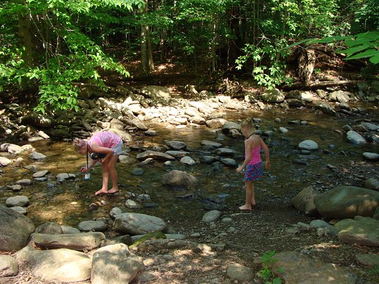 Jeffersonville, VT: the kids in the stream on the maple tour
