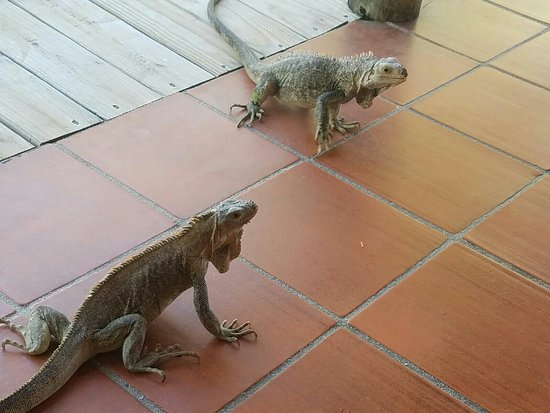 Palm Island Resort & Spa: Resized_20160806_090216_large.jpg