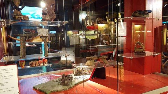Museo delle curiosità