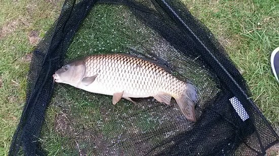 ‪‪Otterham‬, UK: 20160817_173115_large.jpg‬