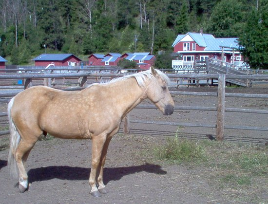 "Cle Elum, WA: Another ""relaxed"" guest at the Flying Horseshoe Ranch!"