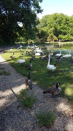 Augusta, MI: You can see lots of Swans, Mallards, and Geese, but would need more time to see other species.