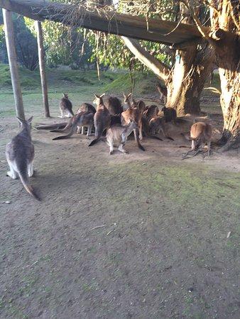 Taranna, أستراليا: photo2.jpg