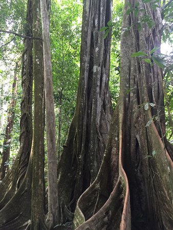 Carate, Kosta Rika: photo9.jpg