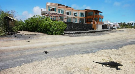 Iguana Crossing: photo3.jpg