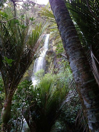 Piha, New Zealand: FB_IMG_1472262565800_large.jpg