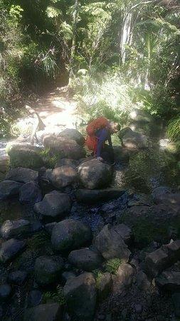 Piha, Selandia Baru: FB_IMG_1472262575991_large.jpg