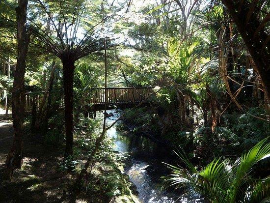 Piha, New Zealand: FB_IMG_1472262582692_large.jpg