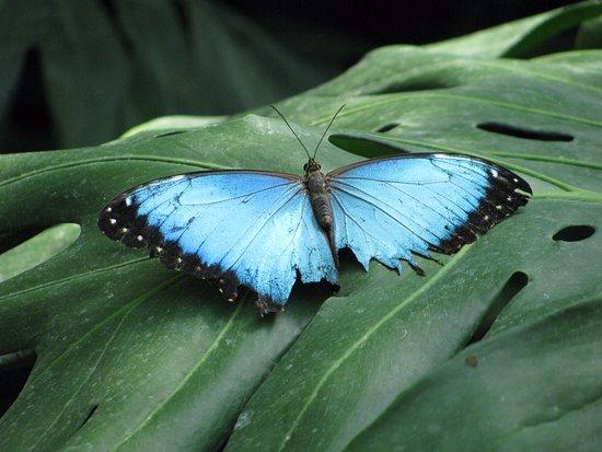 Cambridge, Canadá: butterfly