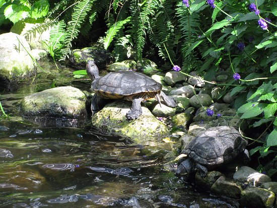 Cambridge, Canada: 2 of the 4 turtles there