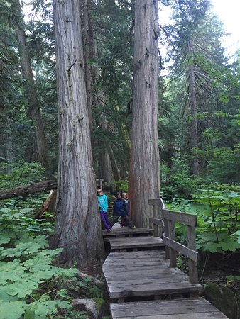 Giant Cedars Boardwalk Trail: photo1.jpg