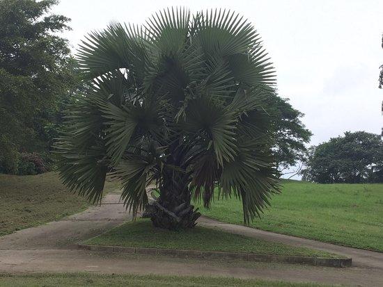 Uyo, Nijerya: photo5.jpg