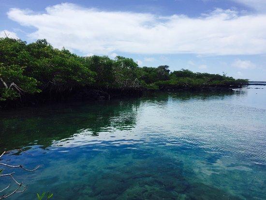 Puerto Villamil, Ekwador: Es una perla!!!!  Un lugar que no se puede de dejar de ir! Un paisaje único! Su flora y su fauna