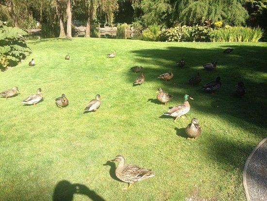 Invercargill, Nueva Zelanda: Feeding the ducks