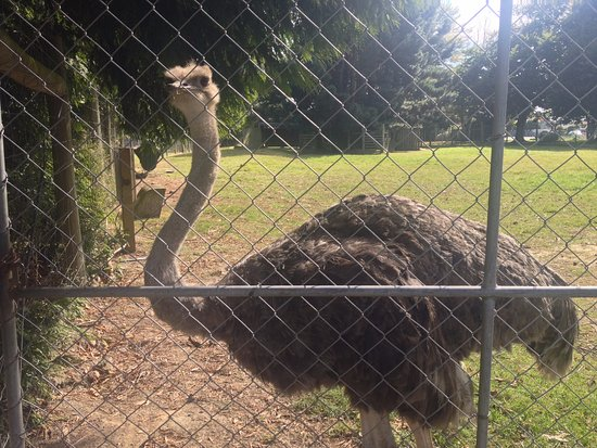 Invercargill, Neuseeland: 'Exotic' animal displays