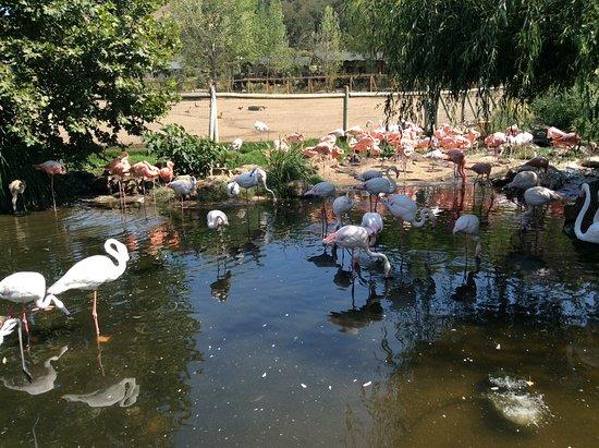 Safari West: Aviary
