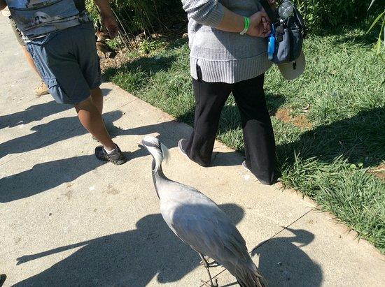 Safari West: Our bird guide