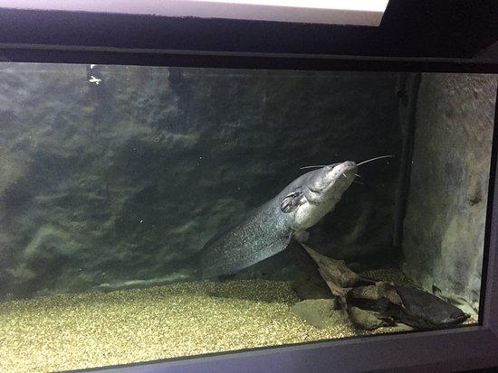 Tulcea Aquarium - ??????The Danube Delta Museum??? ...
