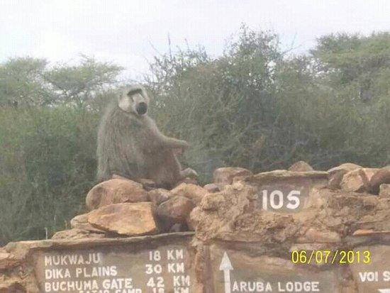 Jacana Safaris - Day Tours