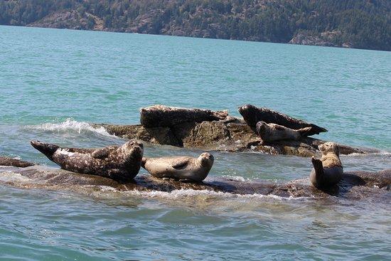 เวสต์แวนคูเวอร์, แคนาดา: Seals near Cristie Island