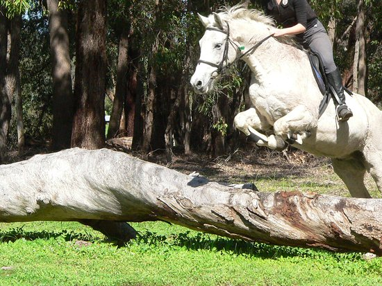 Gidgegannup, Australia: Catering for experienced riders