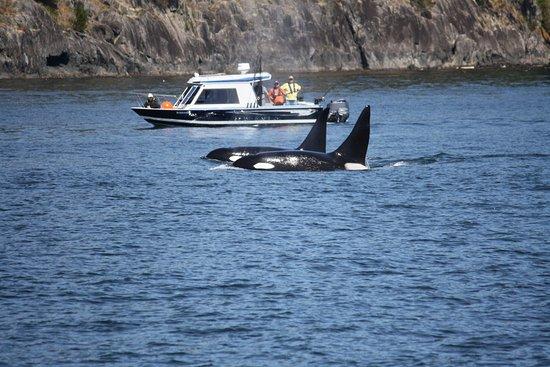 写真Eagle Wing Whale Watching Tours枚