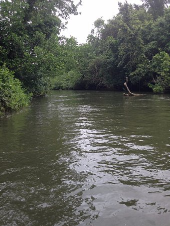 Daintree River from the Solar Whisper, August 2016